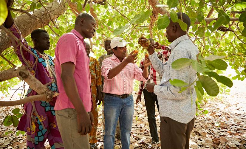 A group of cashew farmers in Nigeria discuss how to improve yields, quality and environmental practices, Olam