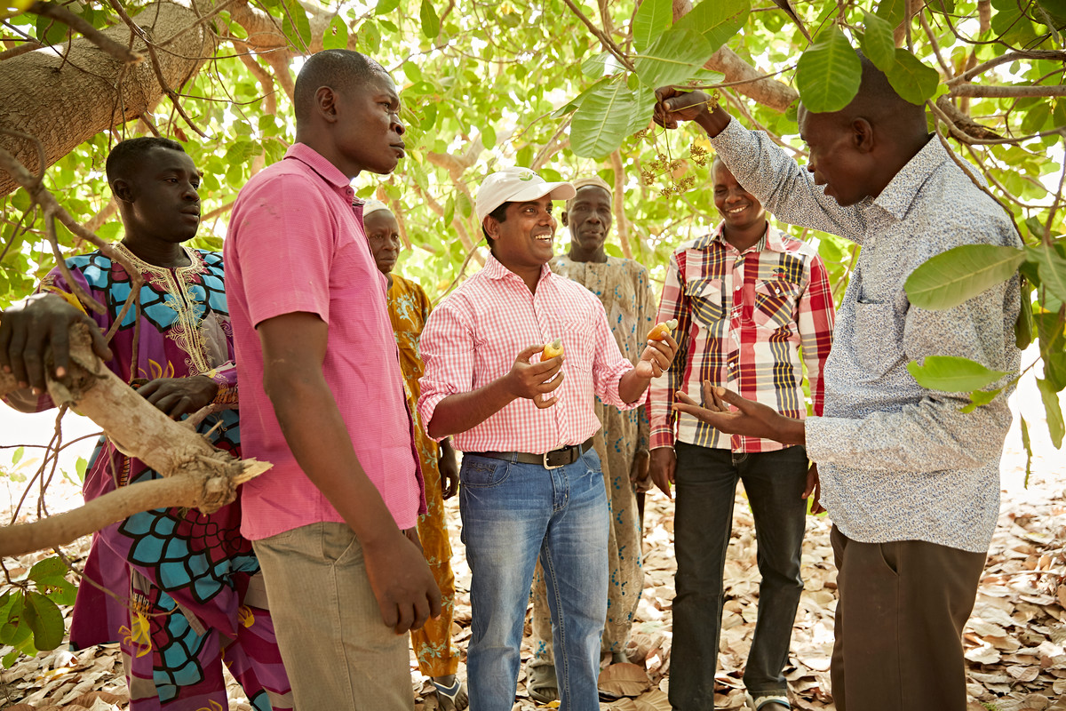 A group of cashew farmers and an Olam trainer discussing how to improve yields, quality and environmental practices, Nigeria.