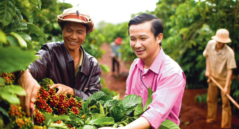 An Olam farmer shows the healthy coffee cherries to a sustainability colleague, Vietnam.