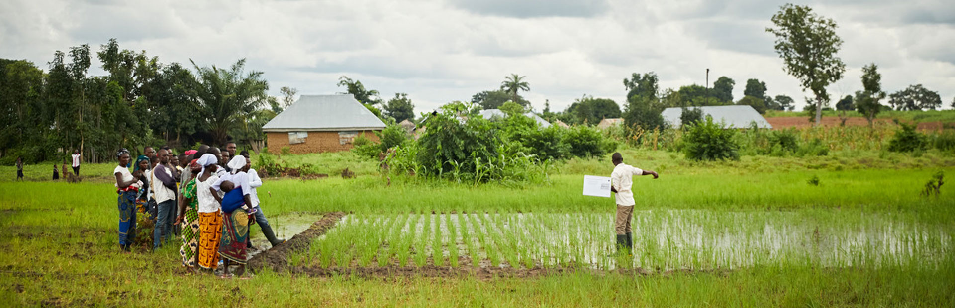 A team of rice outgrowers are being taught best planting practices by an Olam in a paddy field, Nigeria.