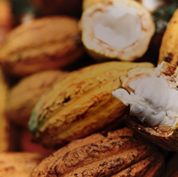 Olam cocoa offers a variety of flavours with a wide range of colours from vibrant red to dark brown, Olam