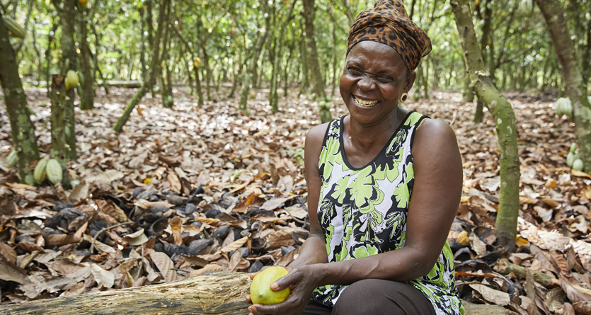 Female farmer shows yellow harvested cocoa pod with the plantation in the background, Ghana, Olam.