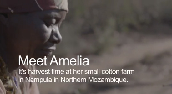 A banner introducing Amelia, a female farmer who harvests cotton in Nampula, Northern Mozambique, Olam.
