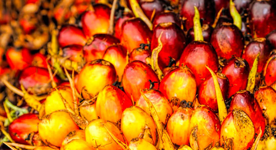 Product Loss in Palm Oil Value Chains