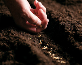 A hand spreading seeds into a trough of soil. Healthy soil is integral to crops, biodiversity and water quality, Olam.