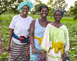 Three smiling female farmers in their field of cotton, Cote d'Ivore.